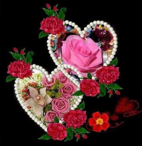 thiep dep ve hoa hong