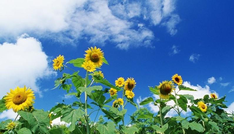 hinh anh hoa va bau troi