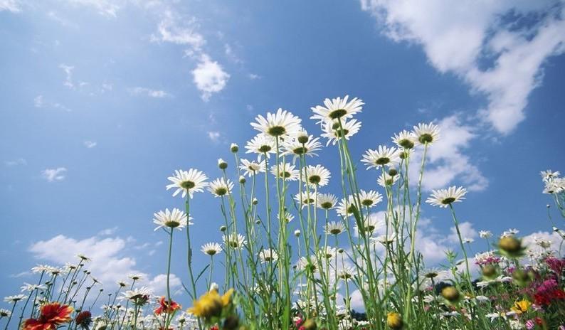 hoa va bau troi