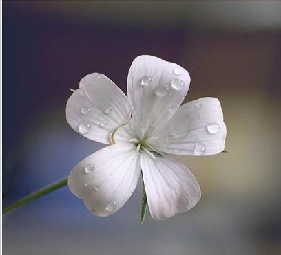 anh dep hoa va giot suong