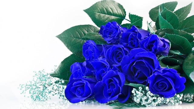 hinh hoa hong xanh 1656
