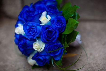 Cây hoa hồng xanh