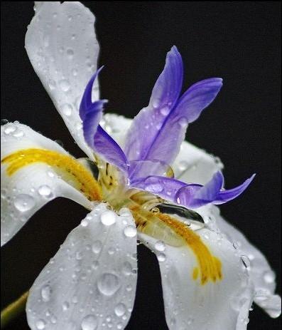 hinh anh dep cua hoa va giot suong