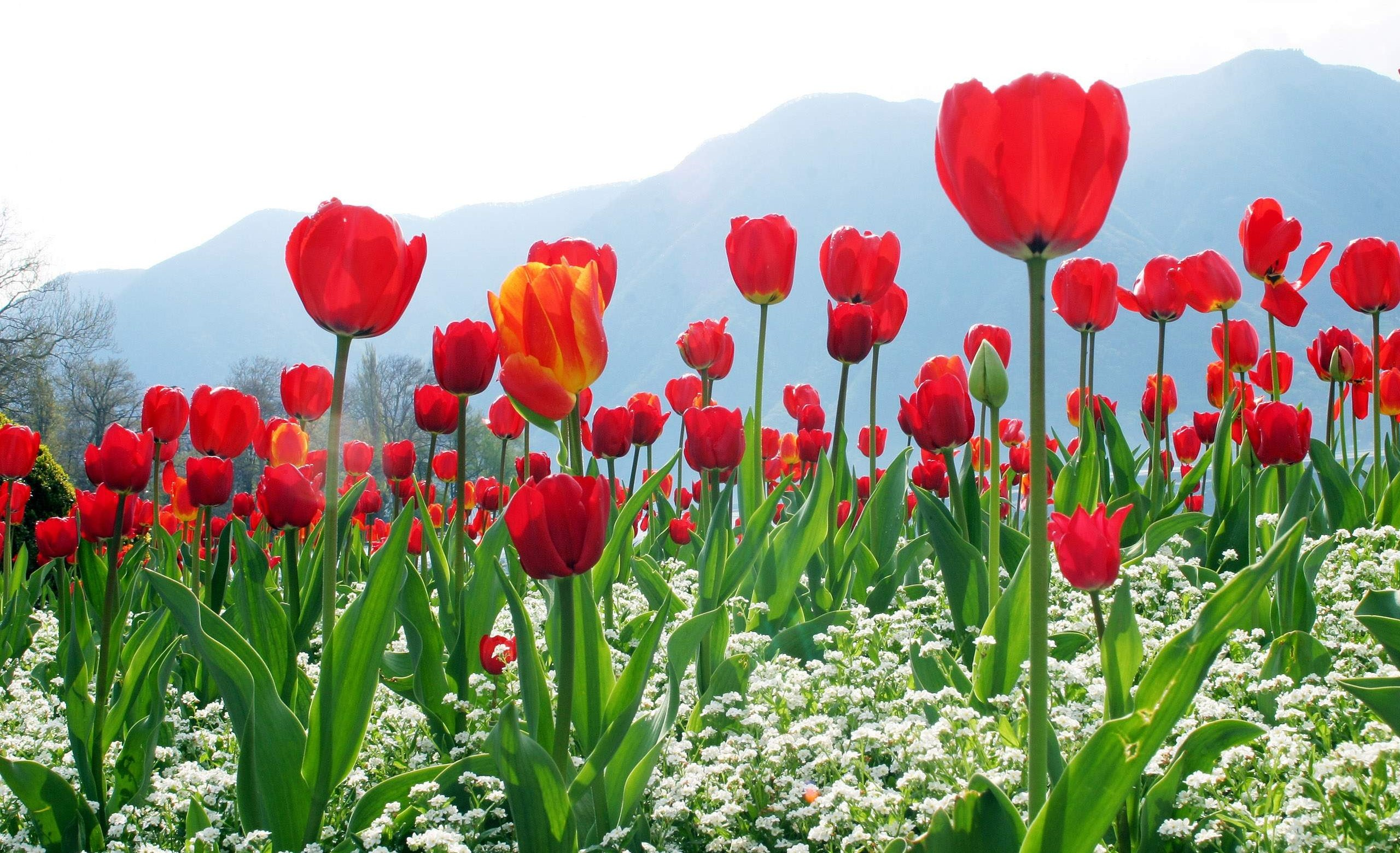 hinh nen hoa dep