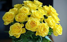 Hoa hồng vàng nhạt