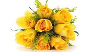 Hình ảnh hoa hồng vàng Đà lạt