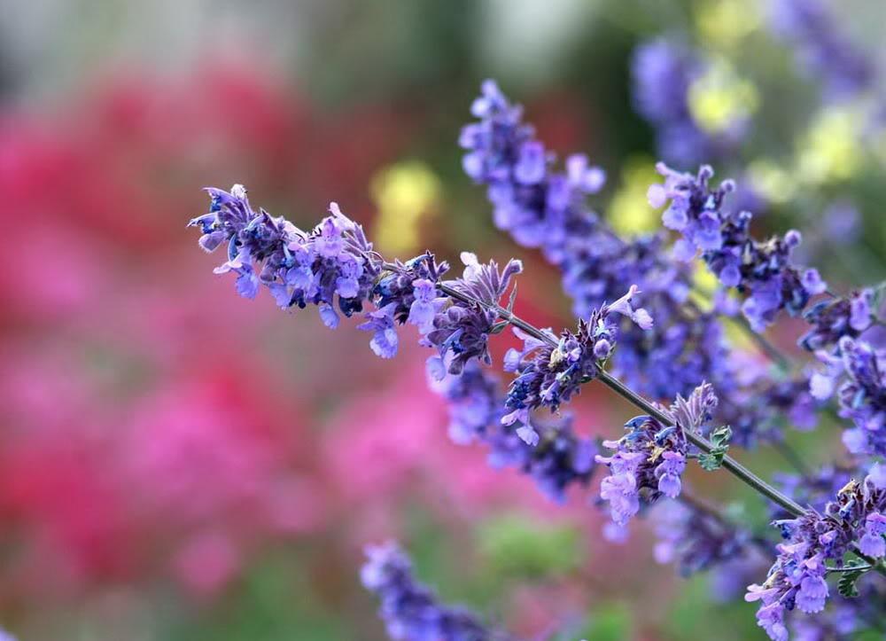 hoa oai huong dep