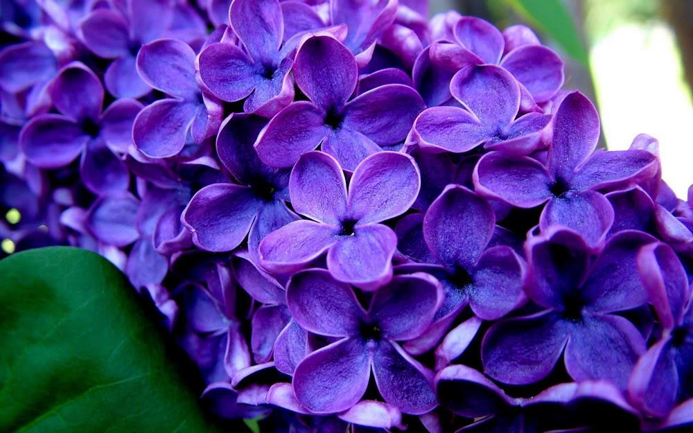 loai hoa oai huong