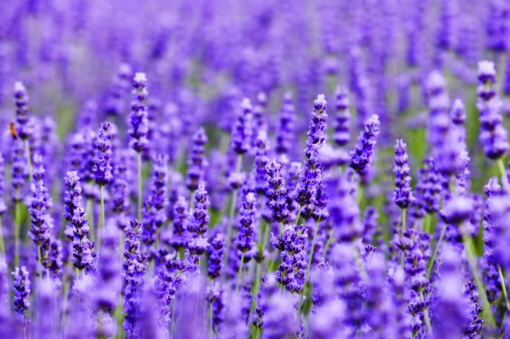 nhung doa hoa oai huong