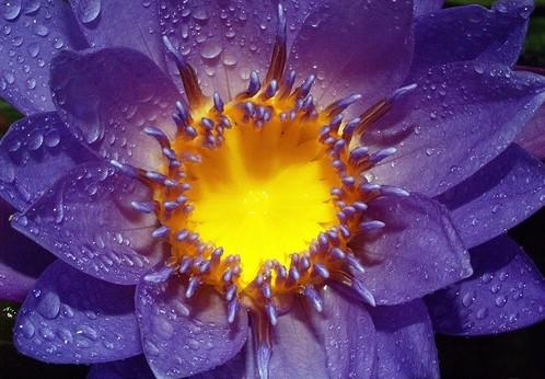 anh doa hoa va giot suong