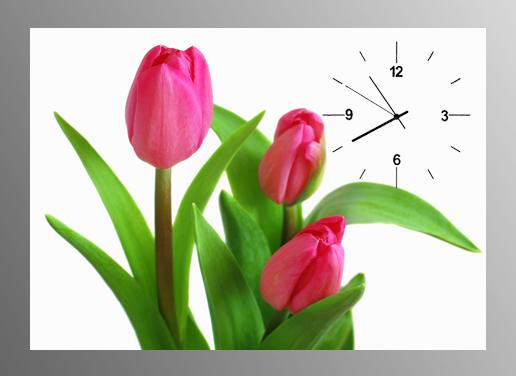 anh hoa tulip trong tranh dong ho
