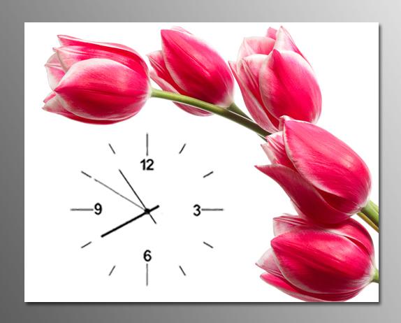 anh tranh dong ho tulip