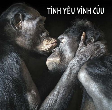 anh che hai huoc dong vat