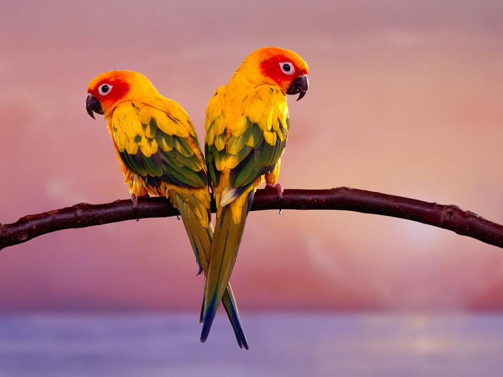 Các loài vẹt biết nói ở Việt Nam