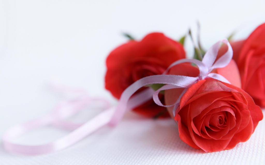 hinh hoa hong do
