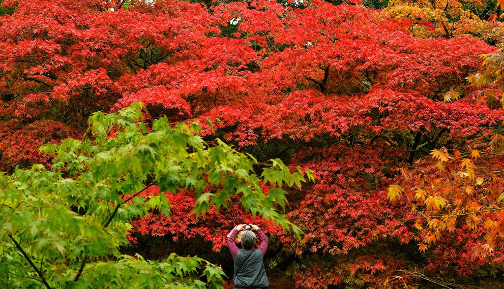 Ảnh đẹp mùa thu vàng