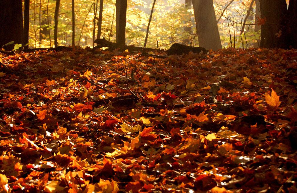 Hình ảnh mùa thu lá rụng