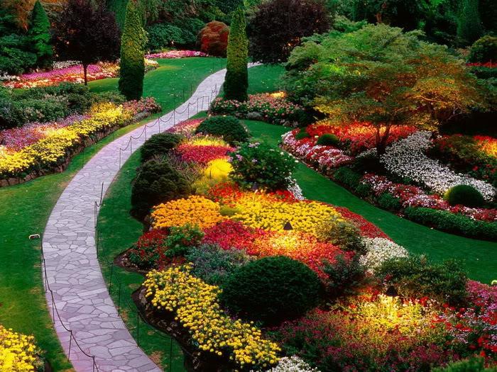 Những cánh hoa đẹp nhất thế giới