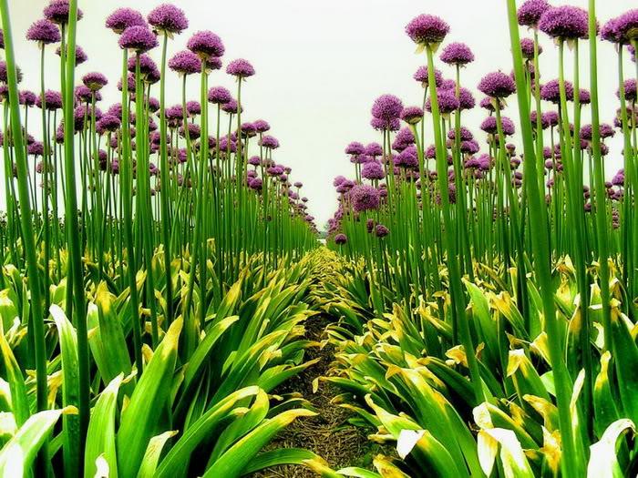 hinh anh vuon hoa dep nhat