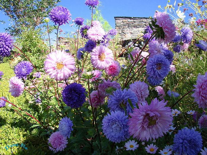 Rừng hoa đẹp nhất the giới
