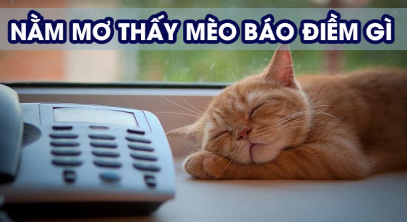 Giải mã giấc mơ thấy mèo, chiêm bao thấy mèo (mão) có điềm gì?
