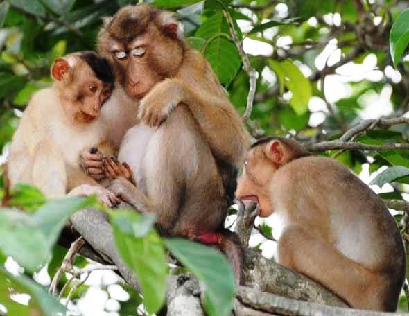 Giải mã giấc mơ thấy Khỉ, chiêm bao thấy Khỉ (Thân) có điềm gì?