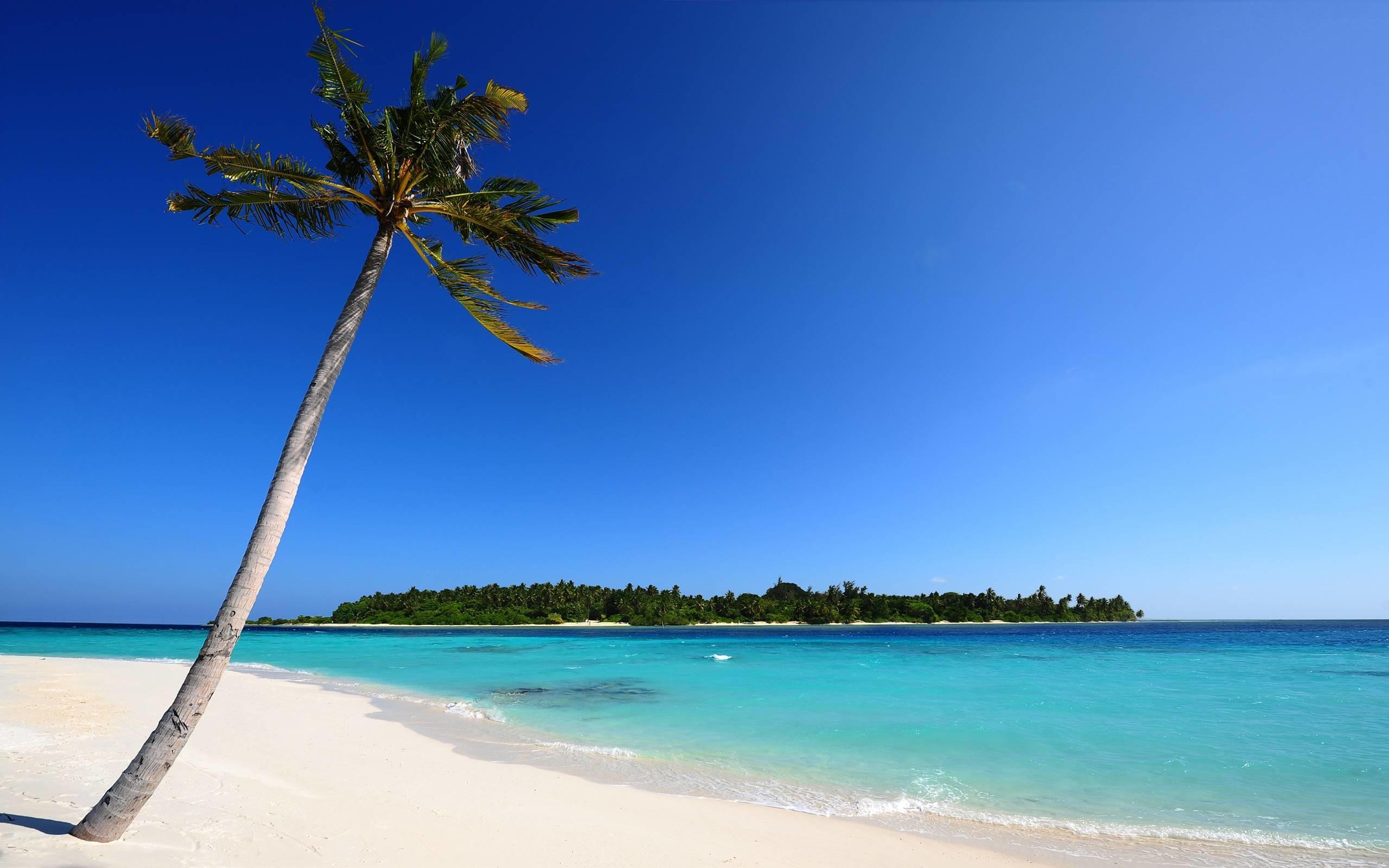 Những khung cảnh thường thấy trên các bãi biển