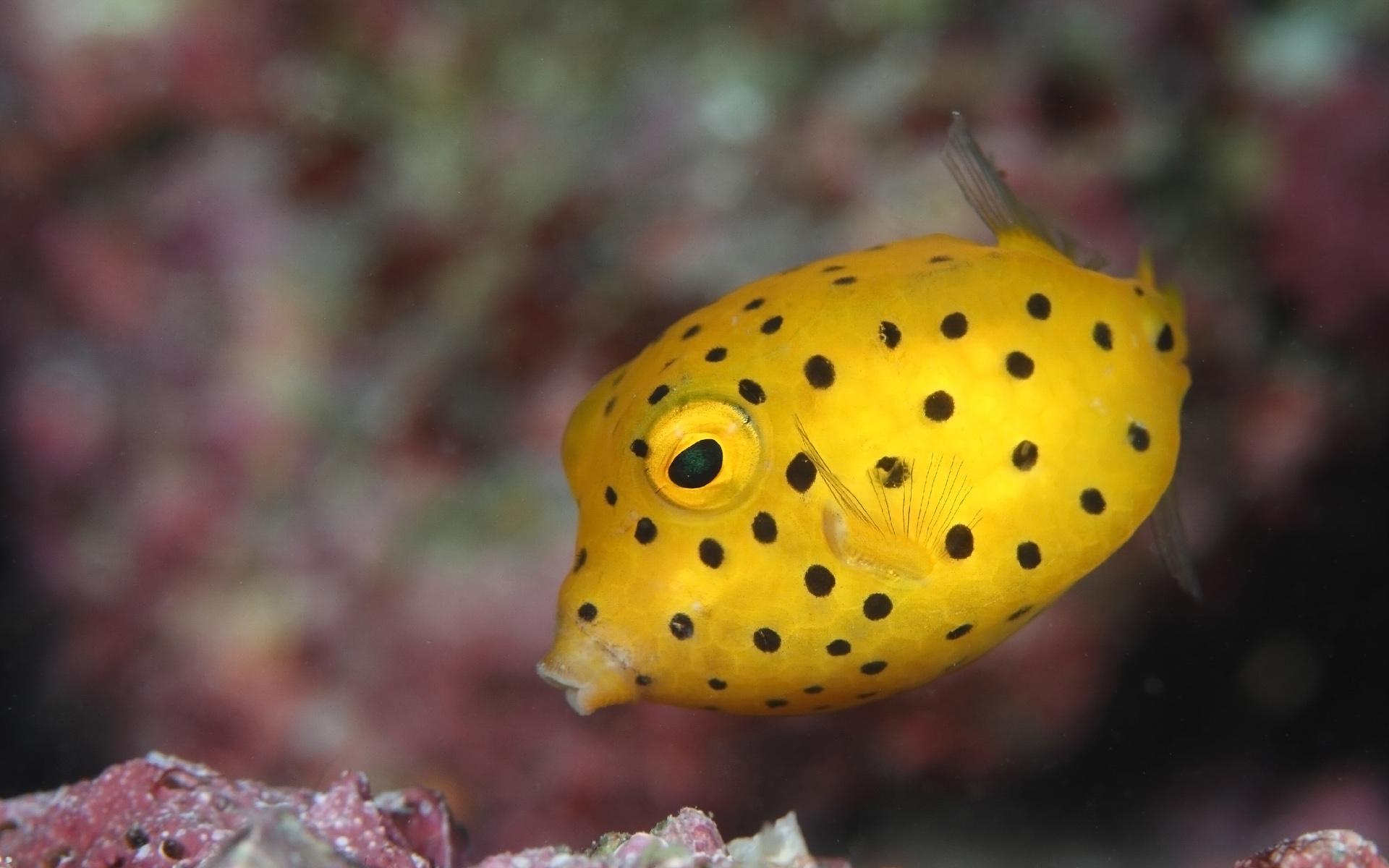 Những loài cá đầy màu sắc
