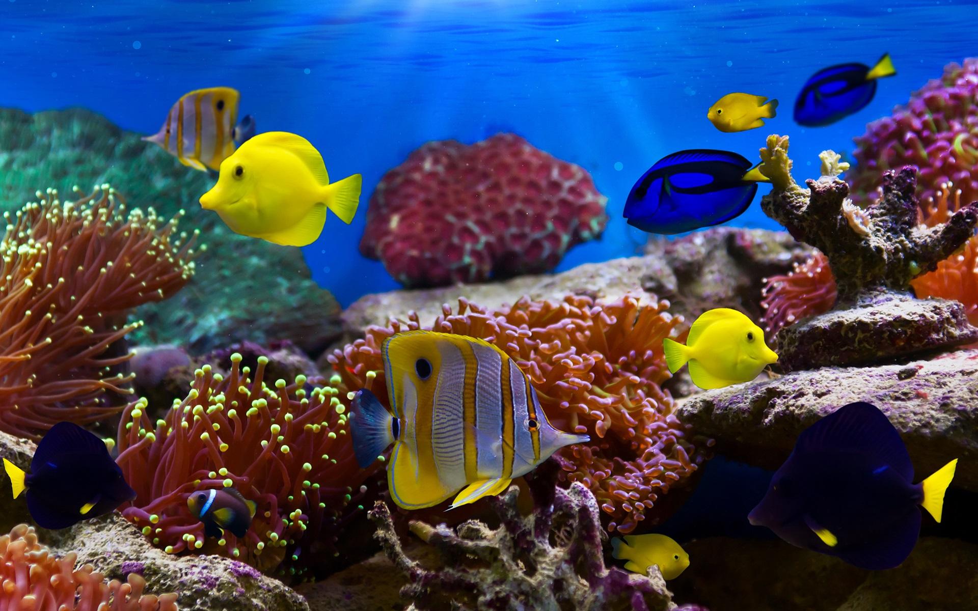 Khung cảnh tuyệt đẹp của 1 rặng san hô