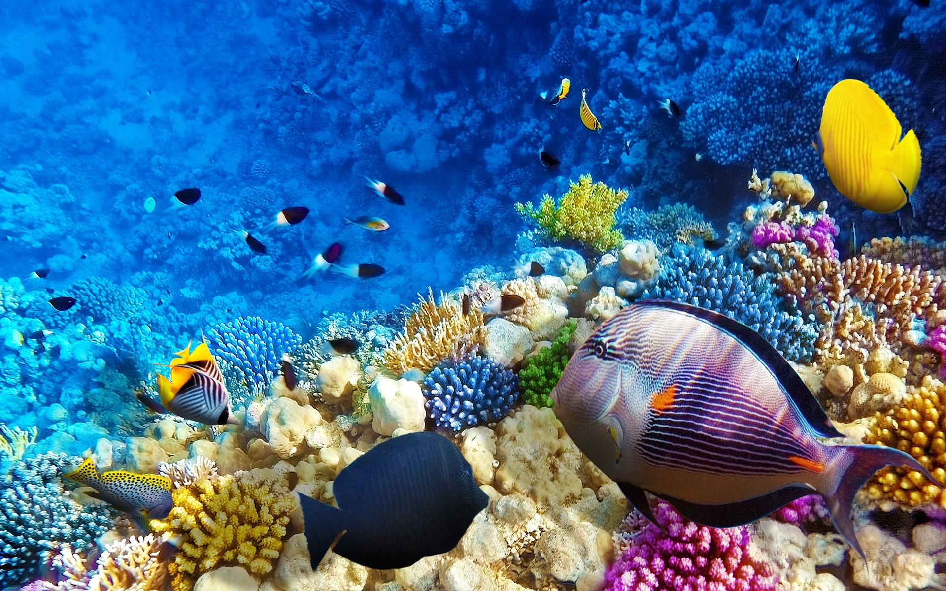 Có rất nhiều loài cá đa dạng sống ở đây