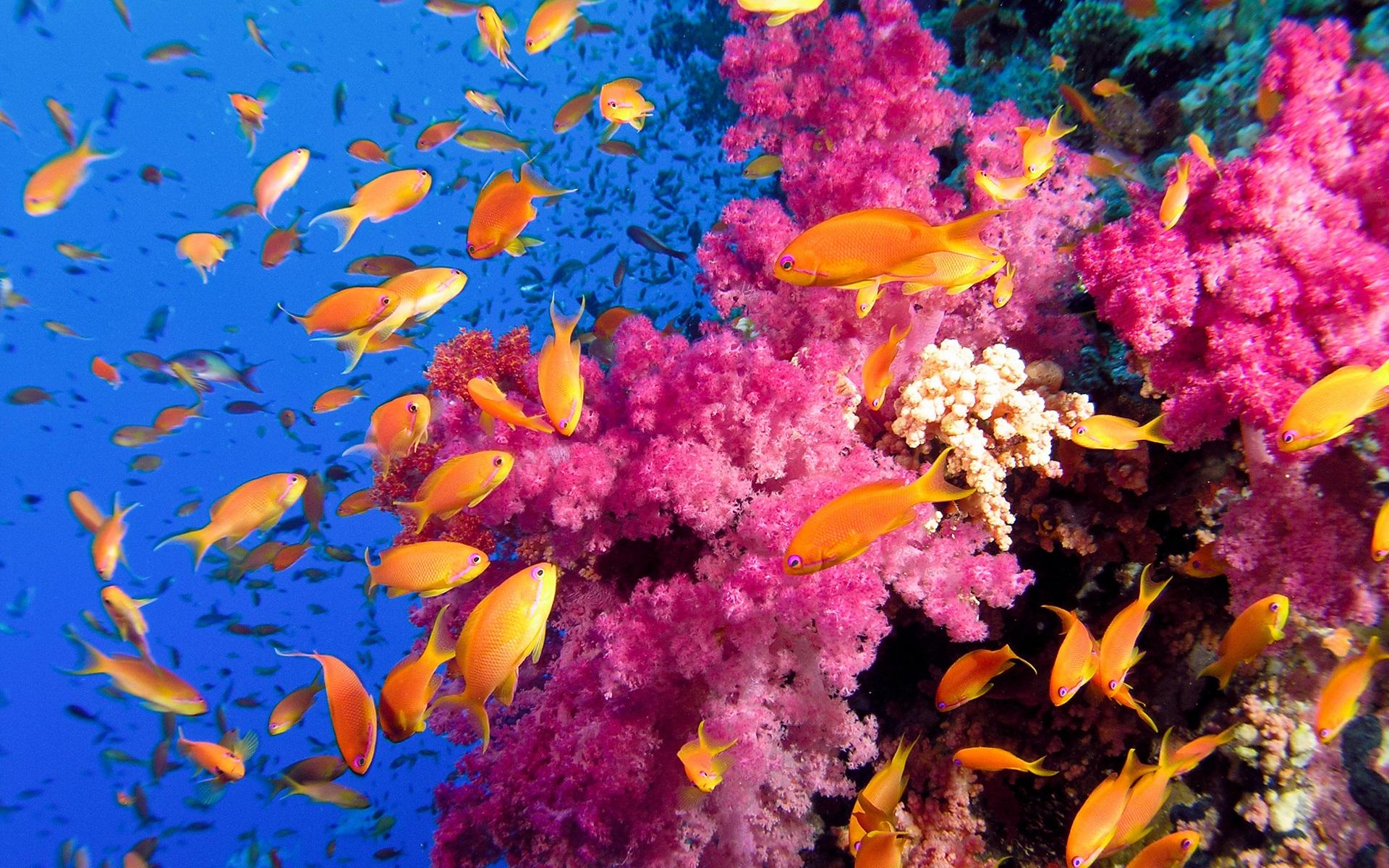 Màu vàng và hồng sáng rực cả một vùng biển