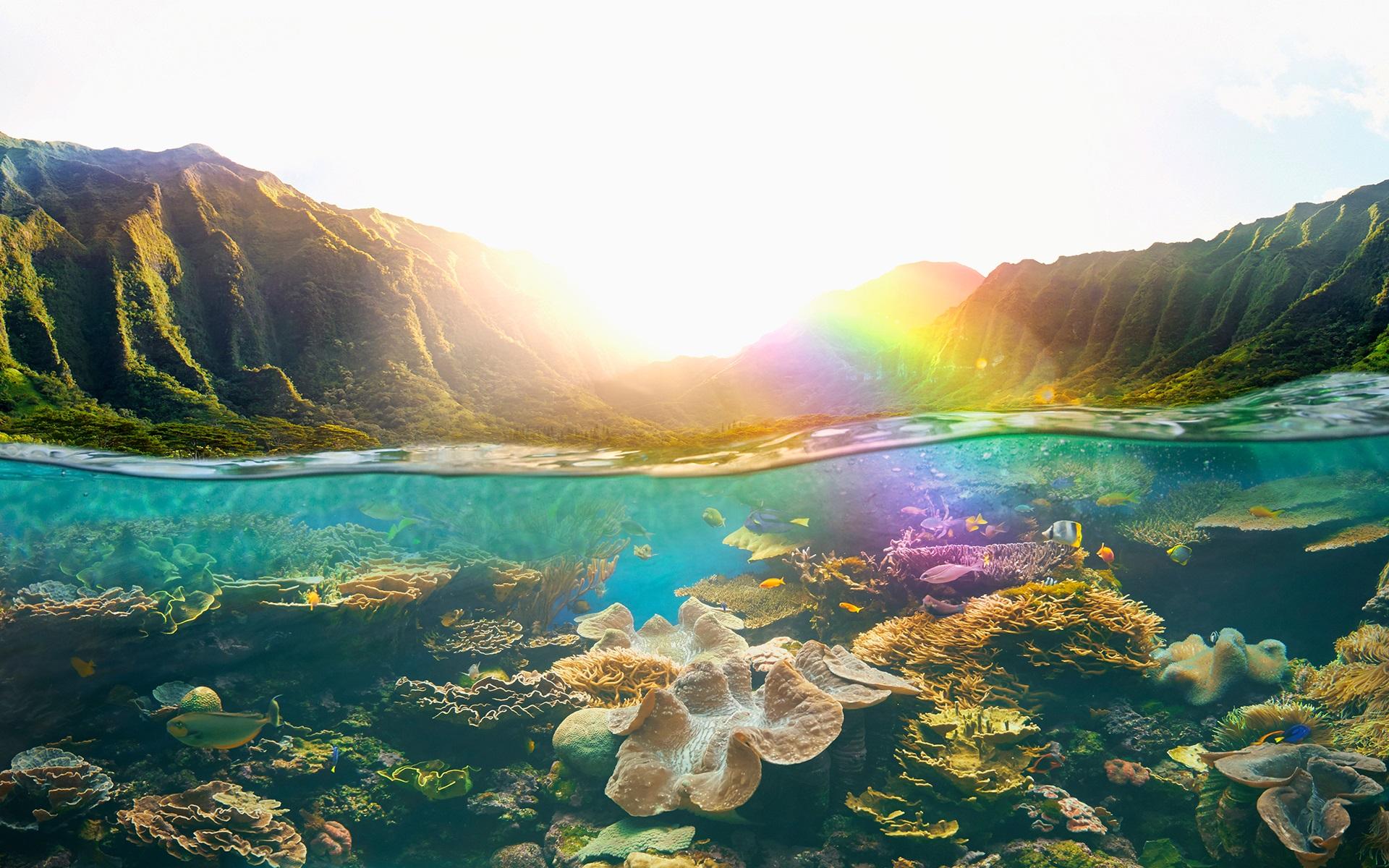 Ánh nắng trên rặng san hô