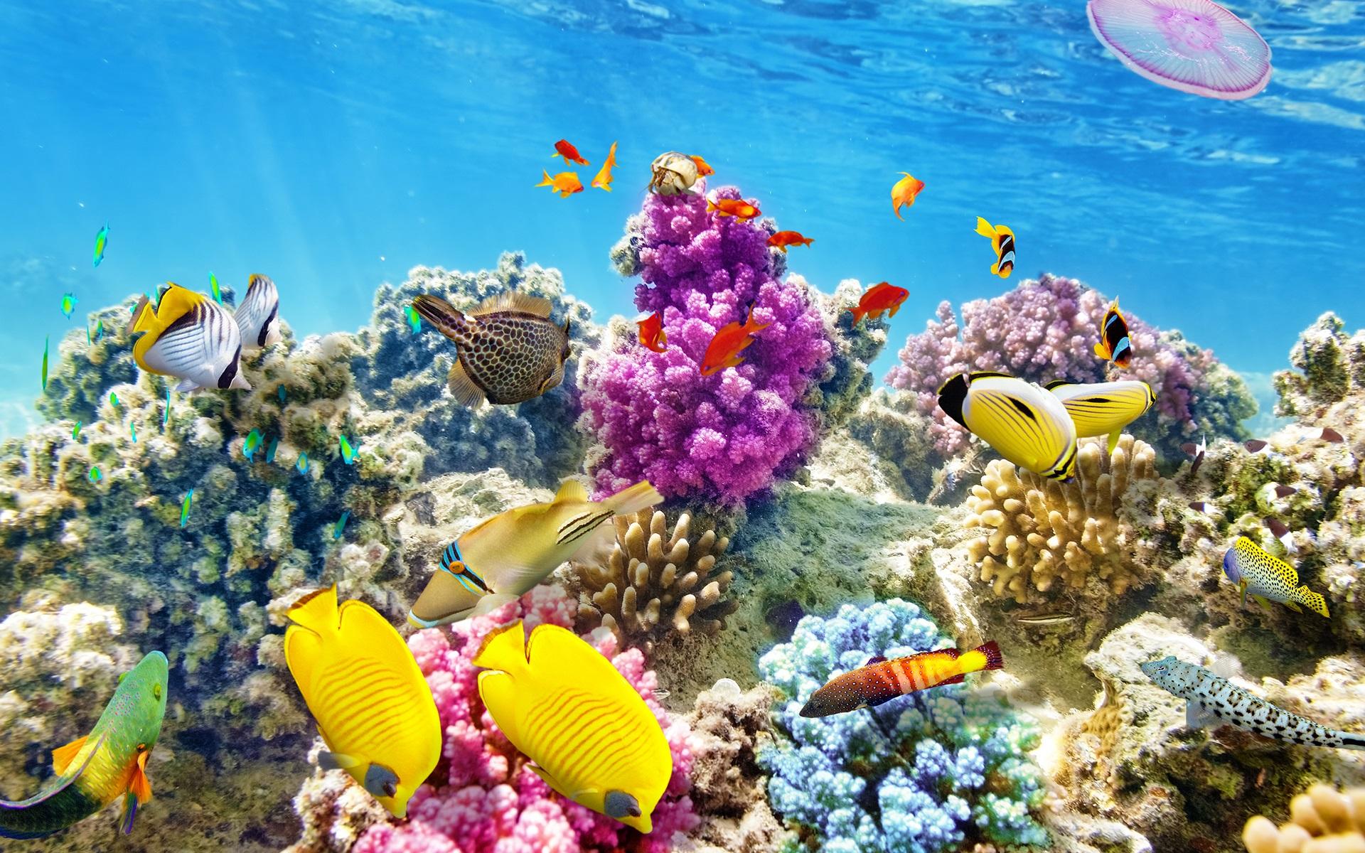 Sự đa dạng các loài cá ở đây luôn khiến bạn ngạc nhiên