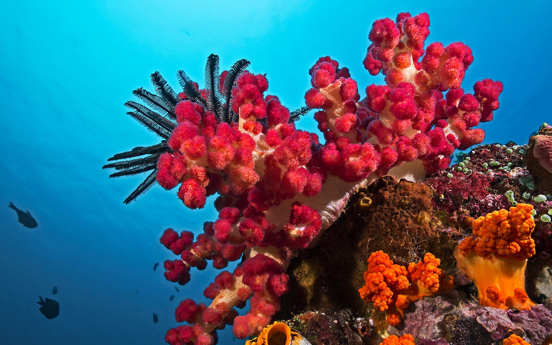 Lại một cây san hô màu đỏ tuyệt đẹp