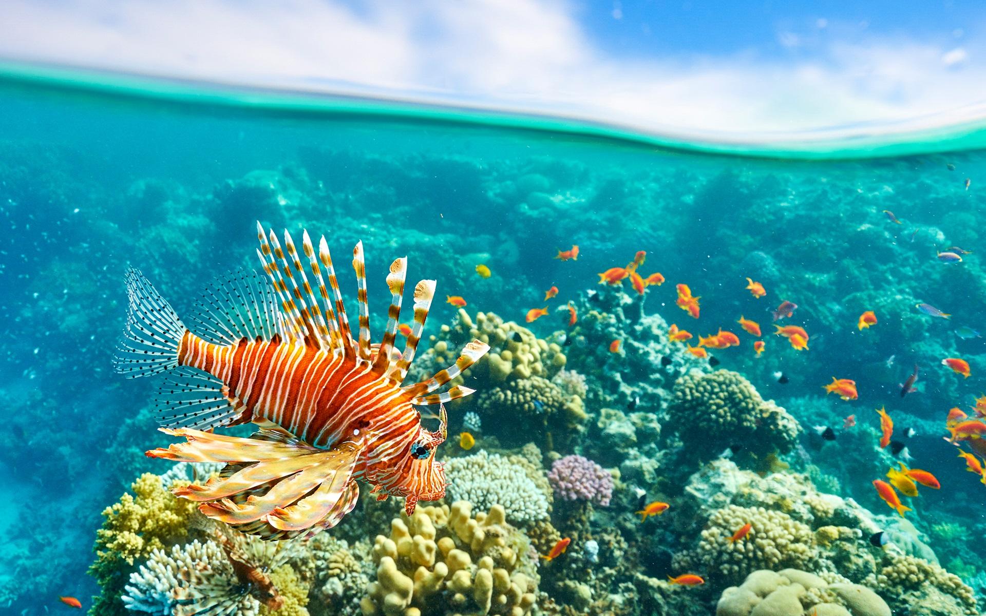 Vẻ đẹp của loài cá này tỉ lệ thuận với chất độc của nó