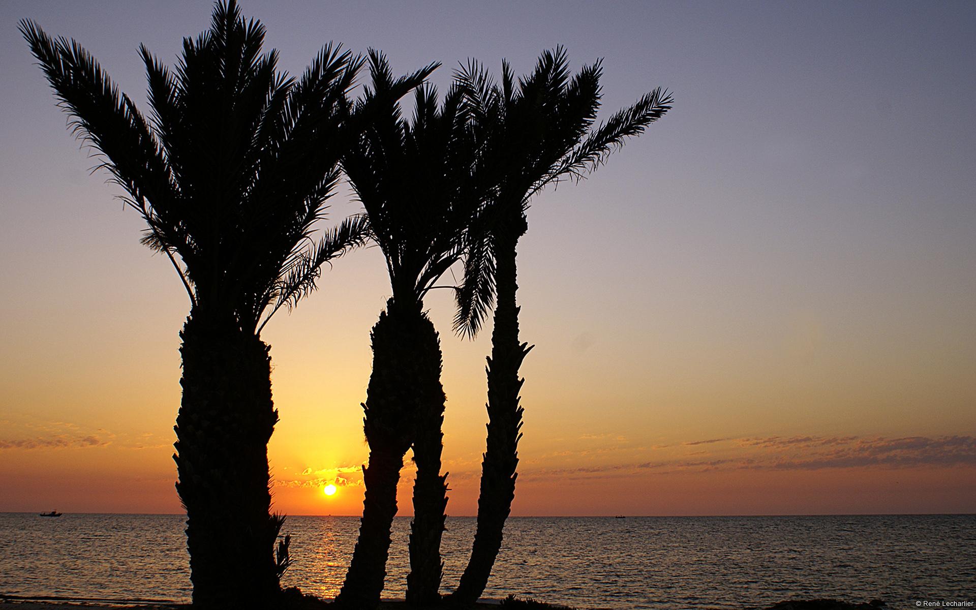 Hoàng hôn và những cây dừa tạo nên khung cảnh nên thơ