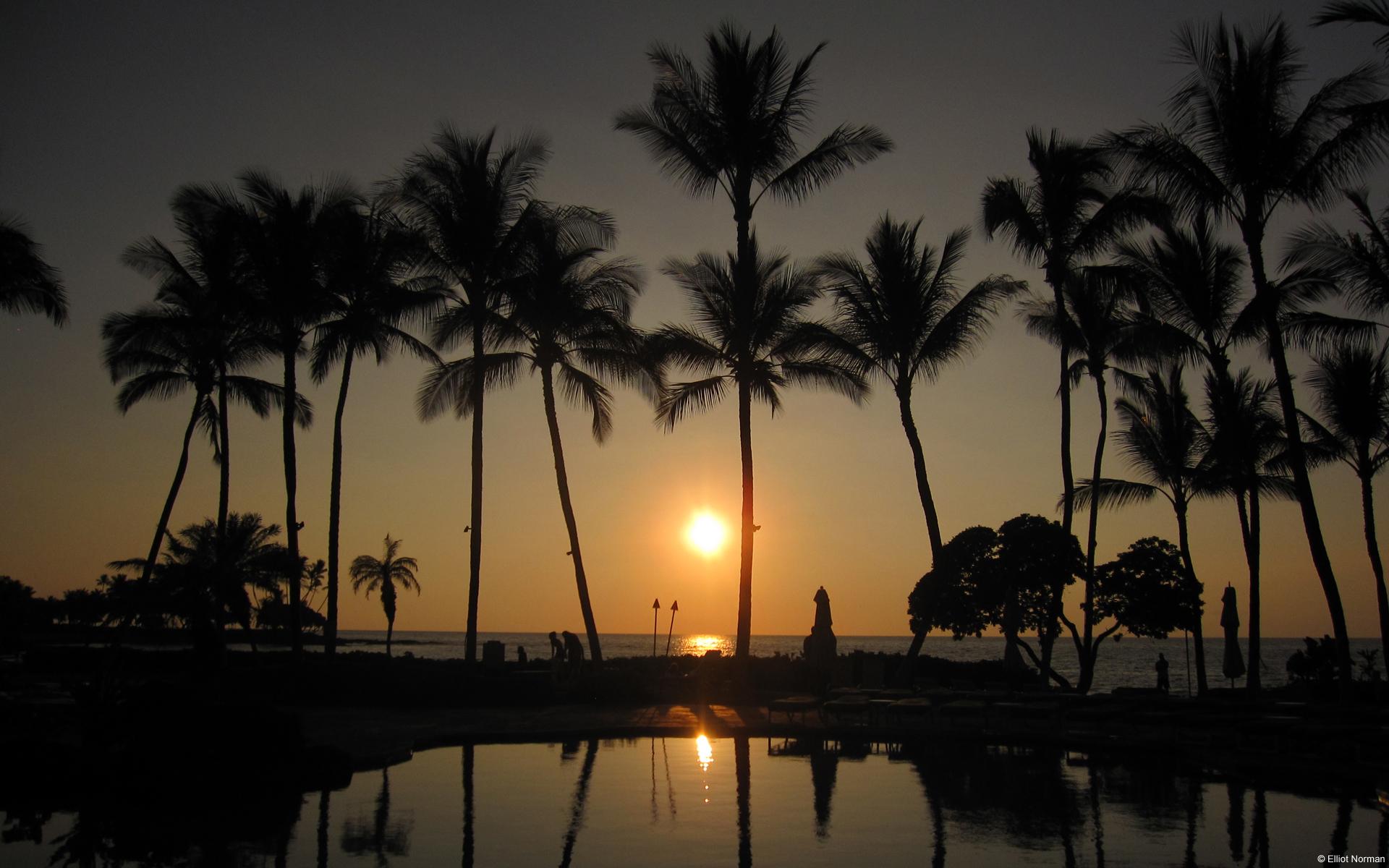 Hàng dừa tạo nên khung cảnh tuyệt đẹp