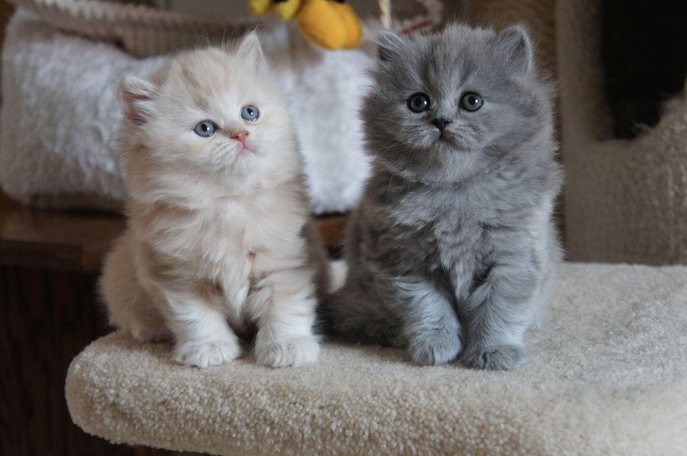 Các bé mèo con luôn mang tới sự dễ thương khó cưỡng