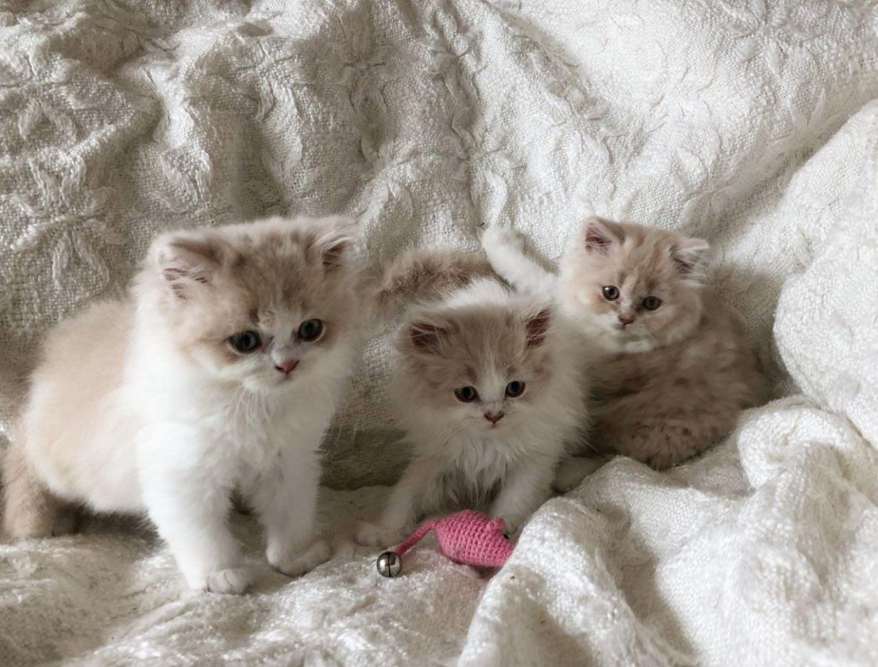 3 chú mèo nhí