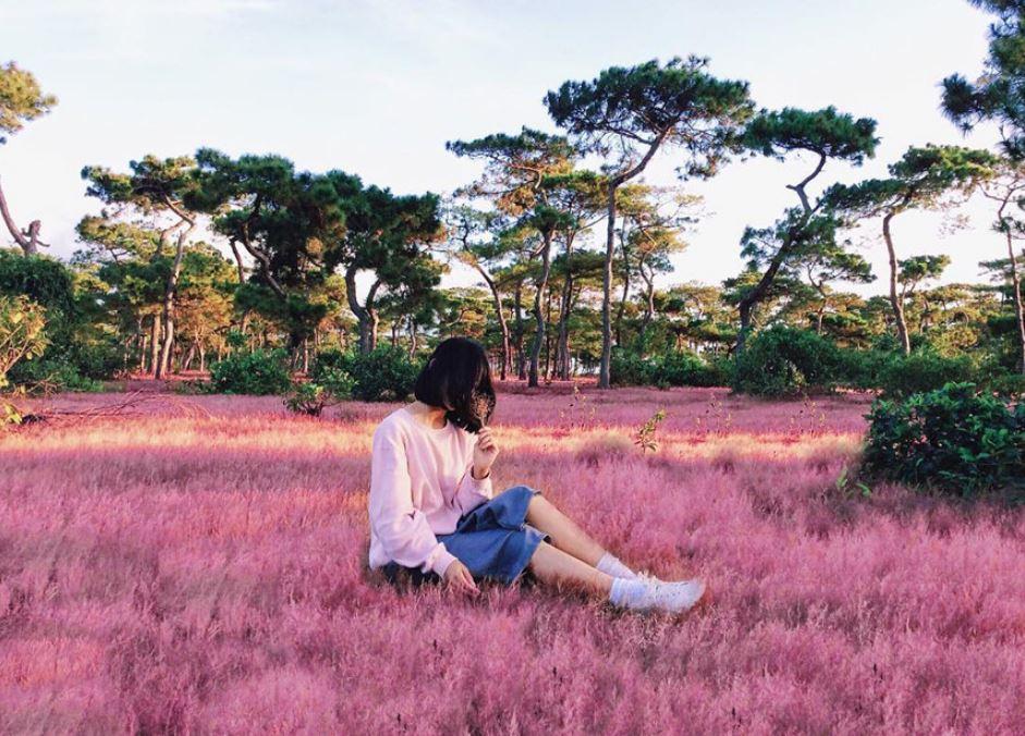 Đồi cỏ hồng với khung cảnh bát ngát