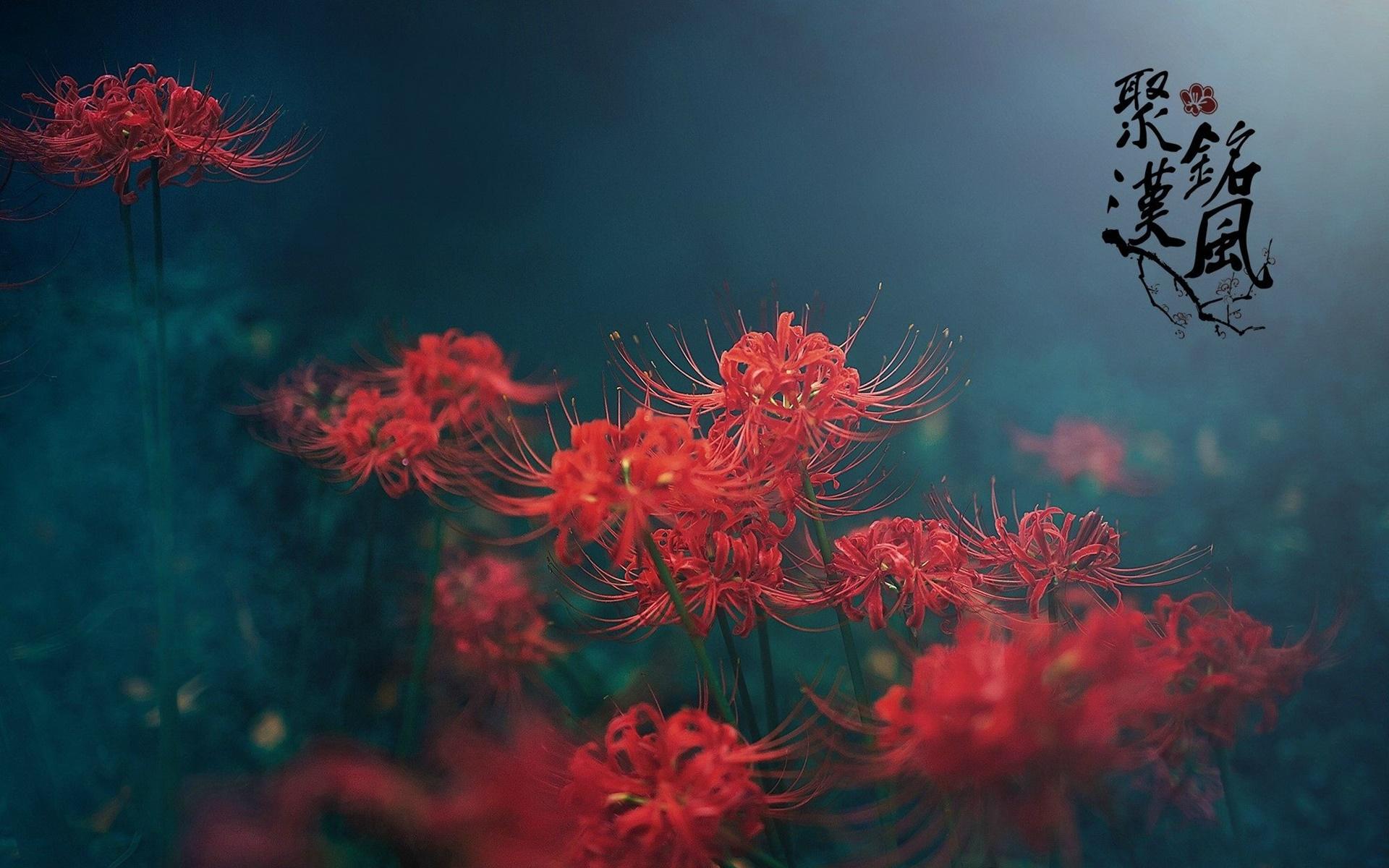Những bông hoa với sắc màu đỏ rực