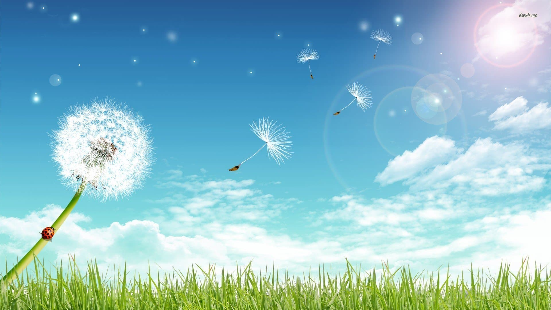 Những cánh bồ công anh bay theo gió