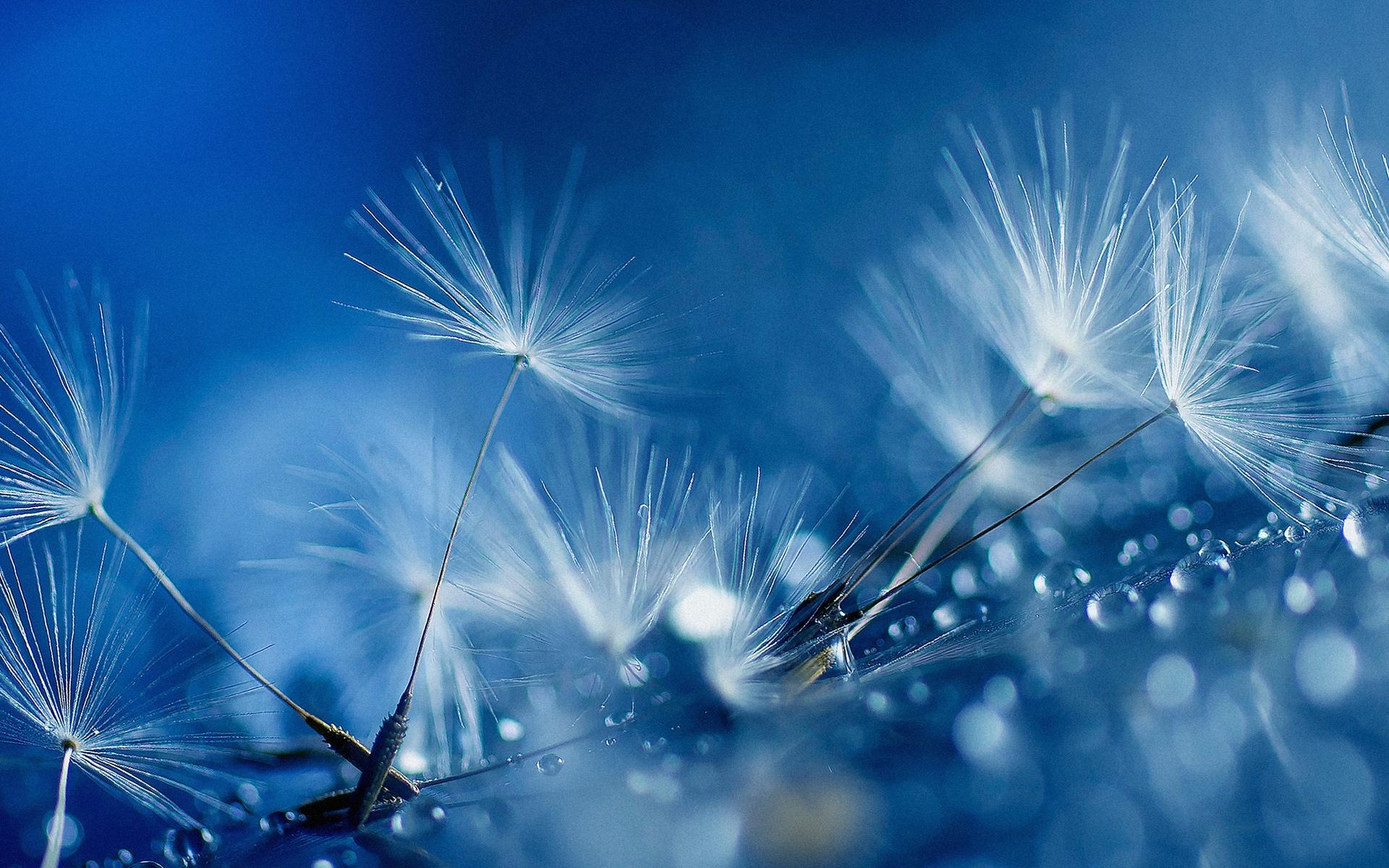 Những cánh hoa bồ công anh cũng mang vẻ đẹp riêng