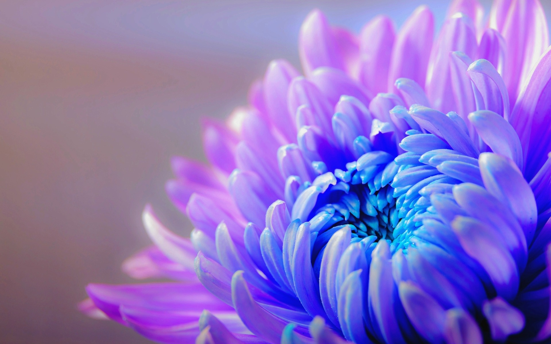Một bông hoa sắc tím