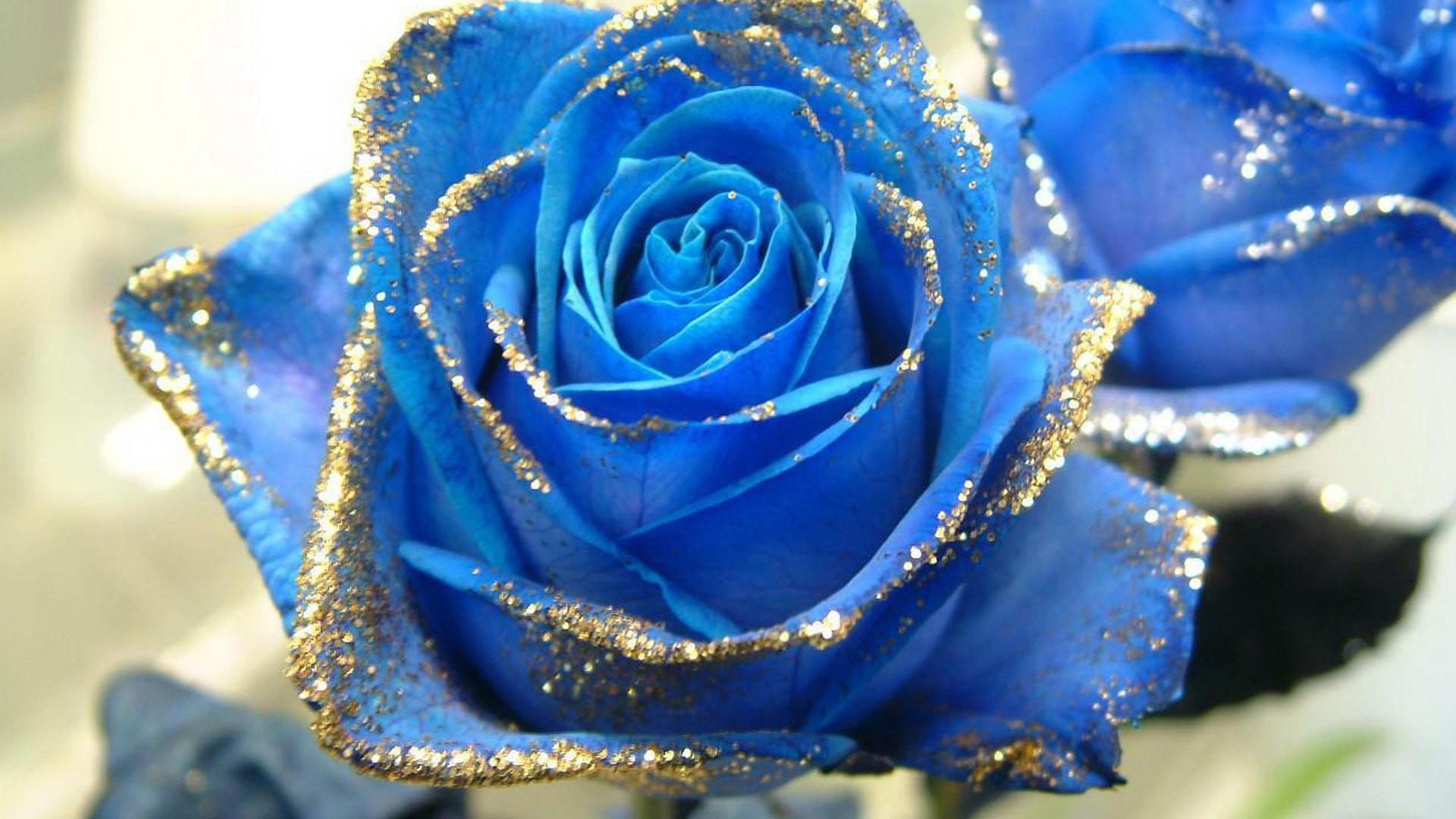 Hình hoa đẹp HD