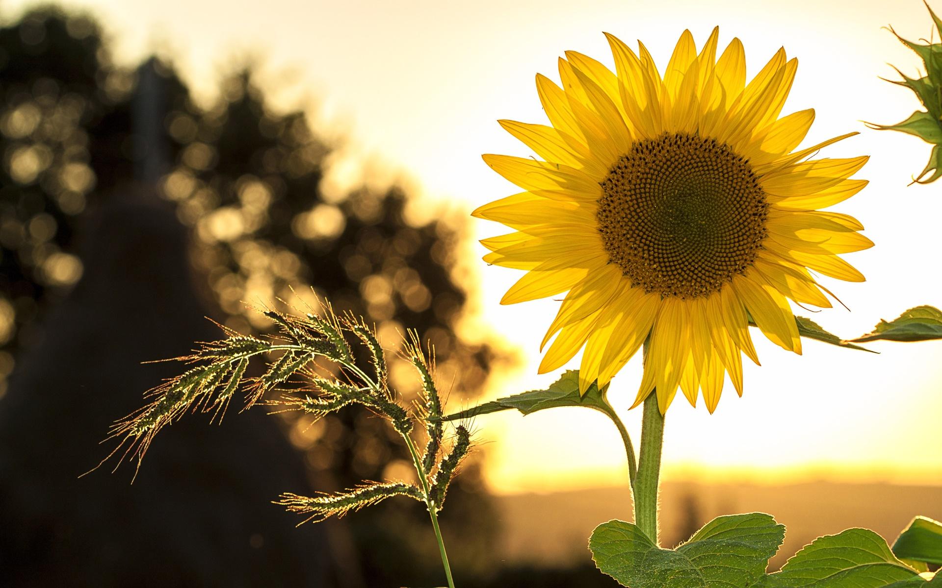 Hoa luôn hướng về mặt trời, biểu trưng cho sự vươn lên mạnh mẽ