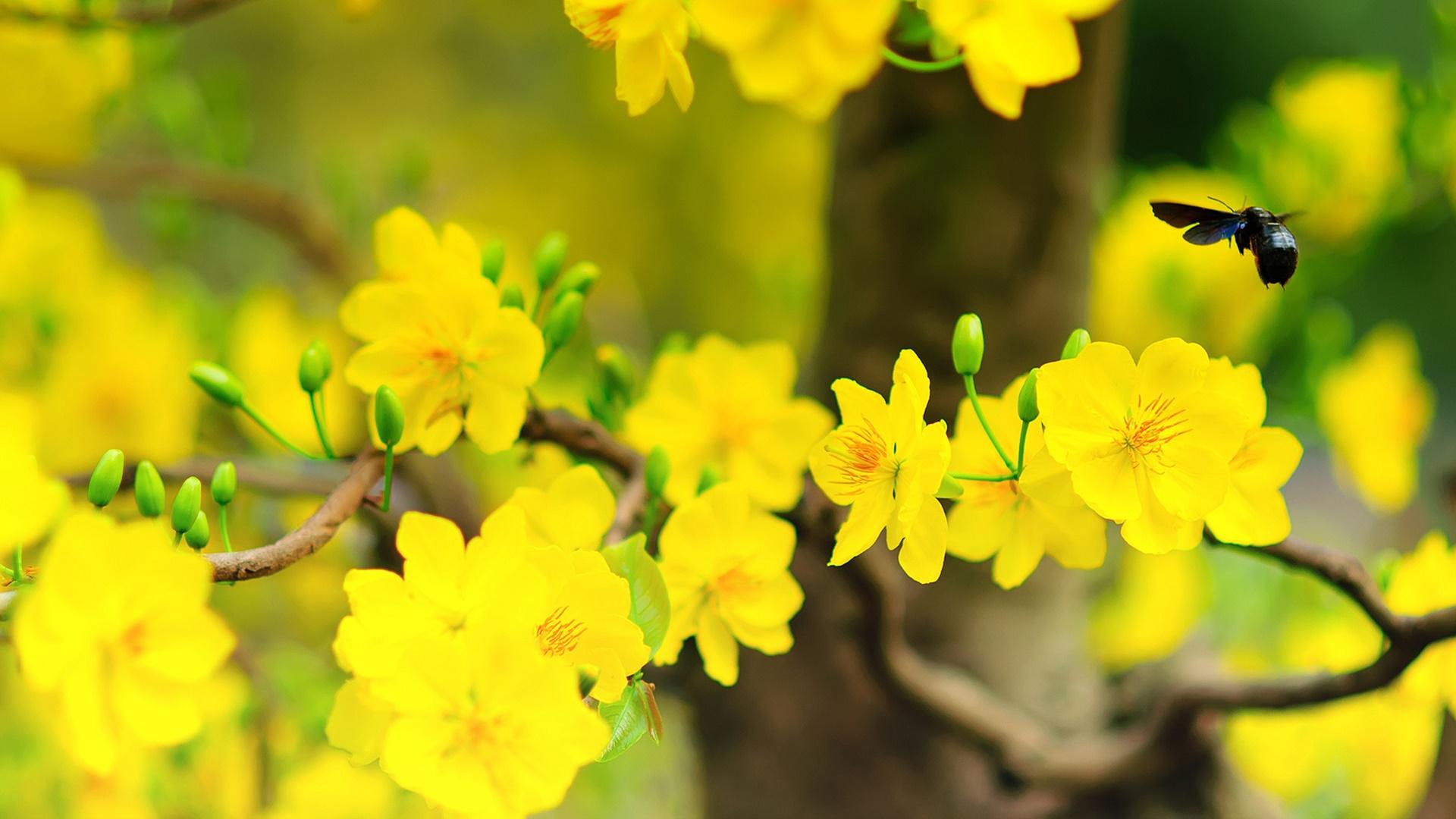 Nét đẹp của hoa mai và côn trùng