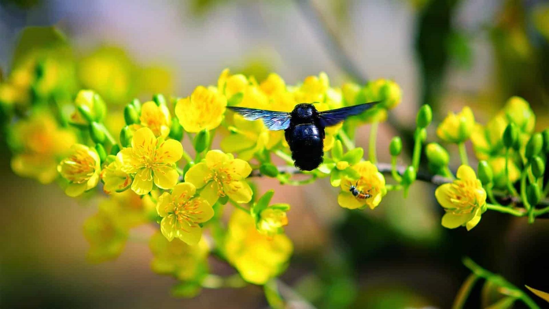 Tải về hình nền hoa mai