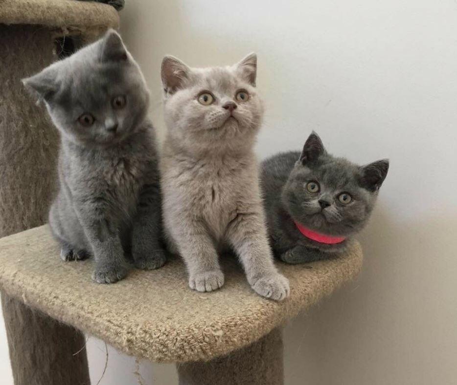 3 chú mèo khác màu siêu cute