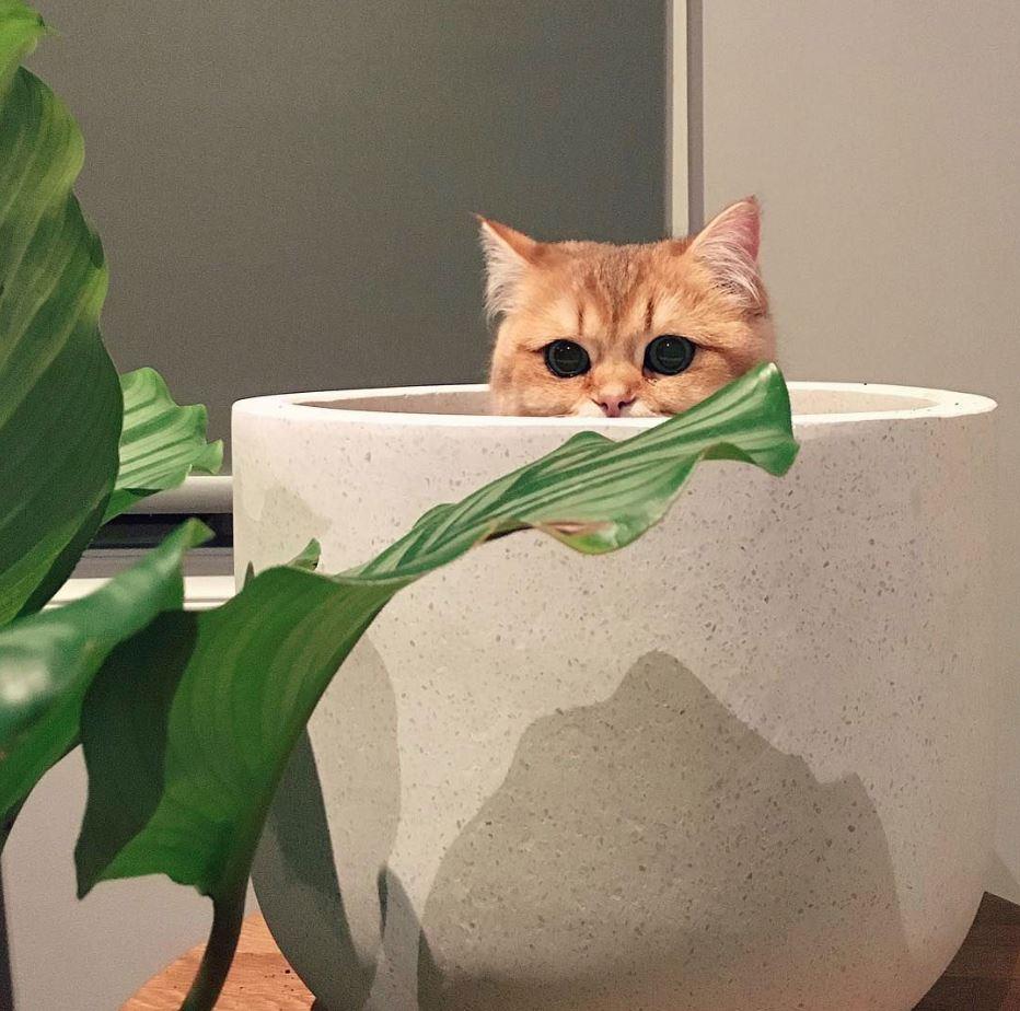 Đang chơi trốn tìm chăng?